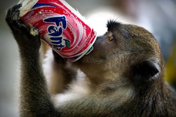 monkey-fizzy-drink