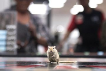 rodent-roulette