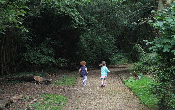 local-woods