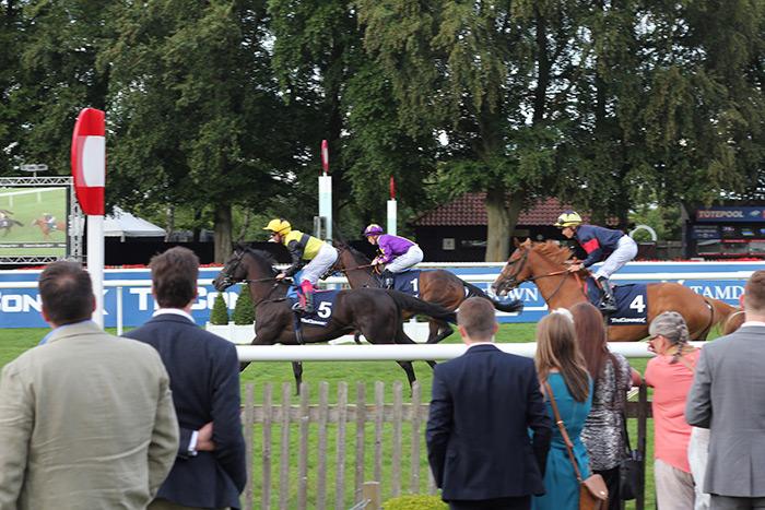 newmarket-races