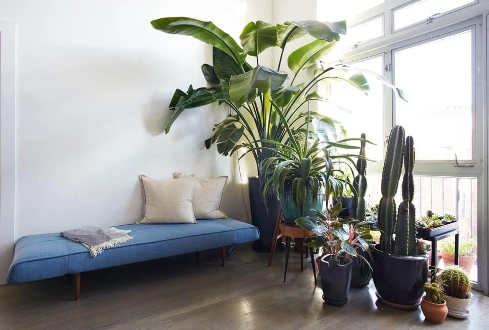interior-design-ideas-plants
