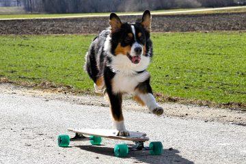 longboard-dog