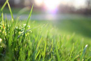 garden grass care